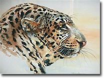 Long Distance Glance - Leopard